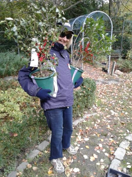 Volunteer Janet Wynn working in the Formal Garden
