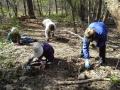 PlantingBulbsSpring2015-fhp