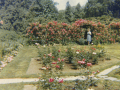 The-Formal-Garden-1950-The-Formal-Garden-was-previously-a-Rose-Garden-which-was-only-for-the-exclusive-use-of-renters-in-the-Newhall-apartments.-The Formal Garden 1950- The Formal Garden was previously a Rose Garden which was only for the exclusive use of renters in the Newhall apartments.