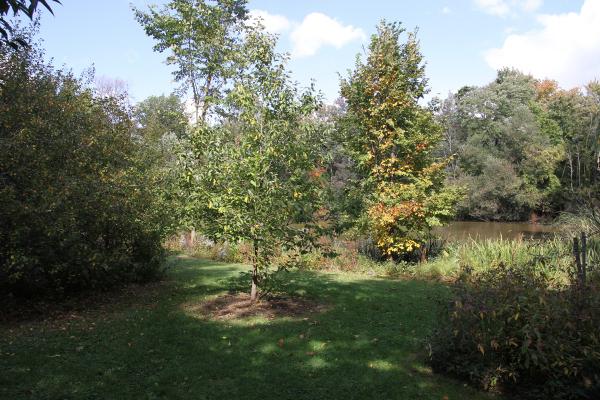 Eris' Tree October 2013  Photo Credit Bruce Wolff