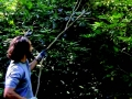 Alex Krieger tackles one of the many invasive vines