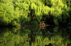 Hall's Pond and Amory Woods