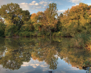 Autumn at Hall's Pond. Photo Credit: Michael Sandman