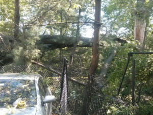 Damage to the fence between Amory Woods and the parking lot for the Massachusetts Association for the Blind. Photo Credit: Deborah Raptopoulos