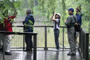 Fred (in blue cap) often leads birding walks right here at Hall's Pond.
