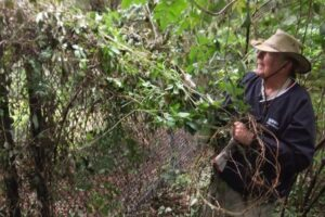Bruce at one of his favorite activities – removing invasives.